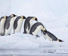 Antarctica Guided tours