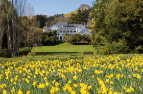 Photo: Otahuna Lodge overlooking the daffodil garden | Image Credit: Otahuna Lodge