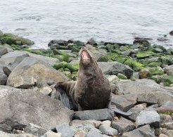 Seals aren't in the business of hiding their yawns