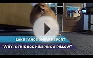 Lake Tahoe Snow Report (and dog humps pillow)