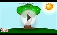 Seed Dispersal Methods and Types Video for Kids