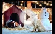 travelers holiday dog commercial